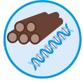 Hout, vezels, genetische bronnen