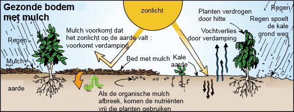 Gezonde bodem door mulchen