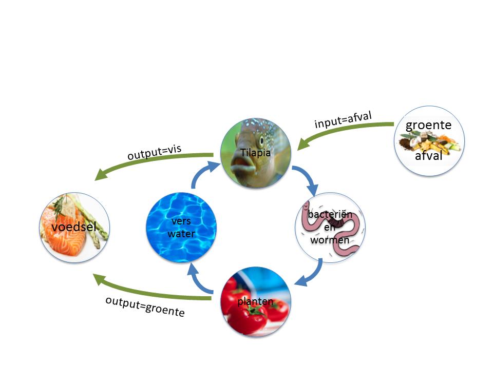 Circulaire economie voorbeeld aquaponics