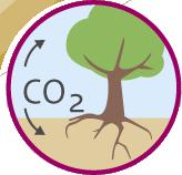 Koolstofvastlegging